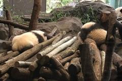 Die Panda Kinder schlafen