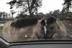 Ponys knuddeln