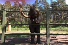 Elefant von Innen