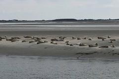 Ausflug zu den Seehundsbänken