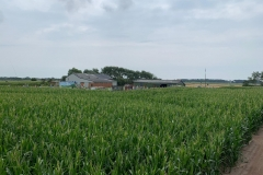 Aussicht im Maislabyrinth