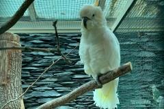 Schöner weißer Vogel