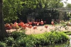 Viele Flamingos